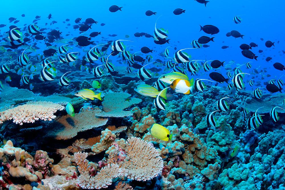 vissen koraal school